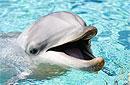 Американец обвиняет дельфина в принуждении к занятию сексом
