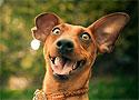 В США разрешили «виагру для собак»