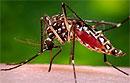 Врачи узнали, что вирус Зика передается половым путем от лиц, не имевших симптомы заражения