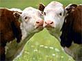 В некоторых штатах США секс с животными не запрещен