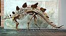Как отличить динозавра-самца от самки?