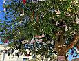 Дерево в нижнем белье украсило Тель-Авив