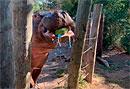 Родители узнали пол будущего ребенка с помощью бегемота